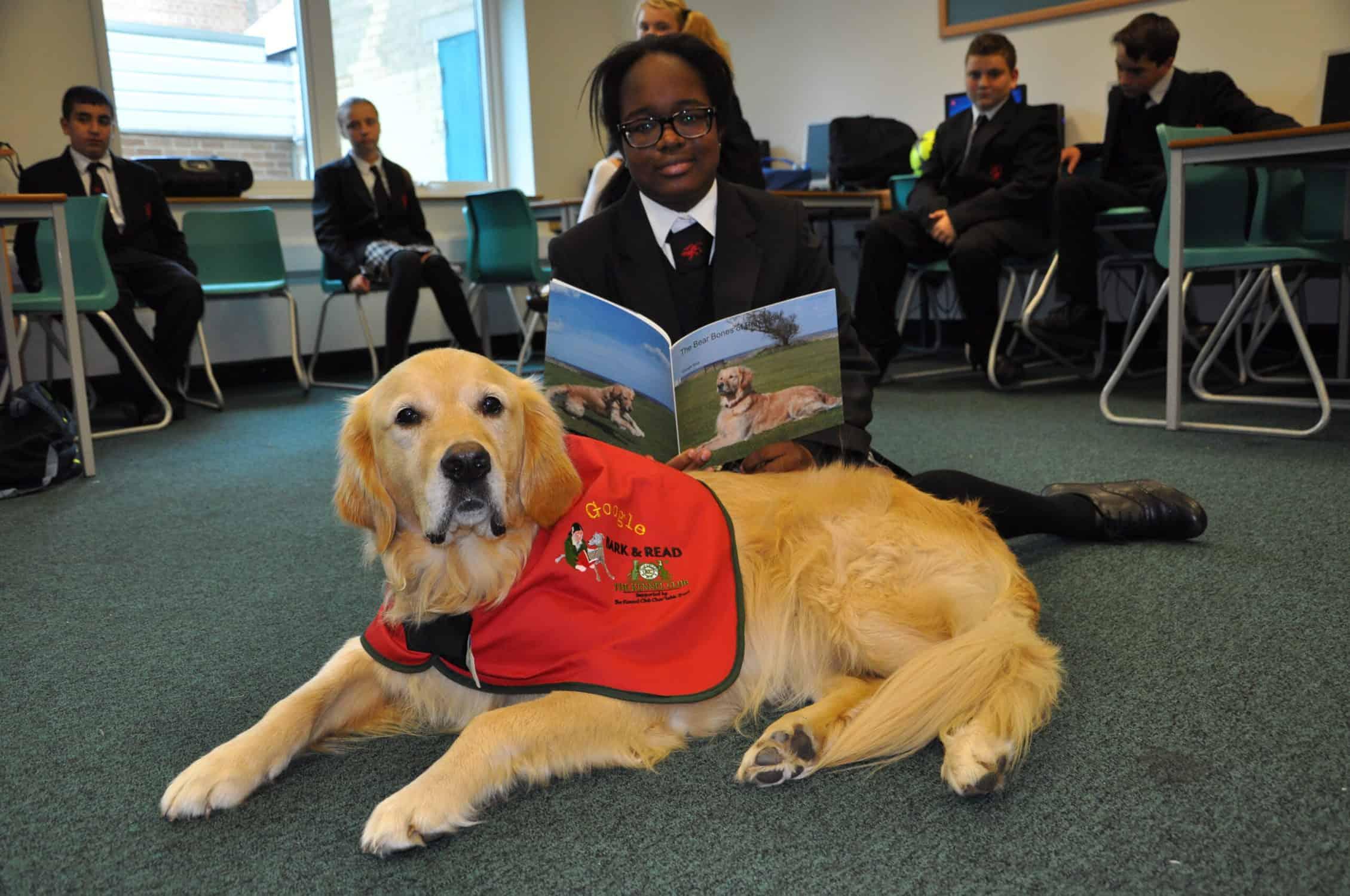 Wenn Kinder einem Hund vorlesen, werden sie bessere Leser und steigern ihr Selbstvertrauen. Der Kennel Club erklärt, warum er ausgebildete Hunde in Schulen bringt, um die Lesefähigkeit von Kindern zu verbessern.